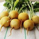 HEIRLOOM NON GMO Zlata Radish 200 Seeds