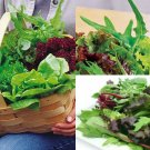 HEIRLOOM NON GMO  Mesclun Mix Salad Blend 100 seeds