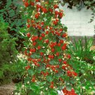 HEIRLOOM NON GMO Climbing Strawberry 25 seeds