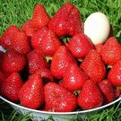 HEIRLOOM NON GMO Remontant Strawberry Strawberry 25 seeds