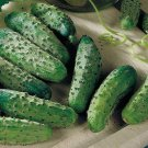 HEIRLOOM NON GMO National Picling Cucumber 15 seeds