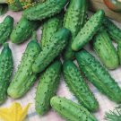 HEIRLOOM NON GMO Parisian Pickling Cucumber 15 seeds