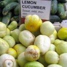 HEIRLOOM NON GMO Lemon cucumber 15 seeds