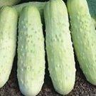 HEIRLOOM NON GMO White wonder Cucumber 15 seeds