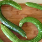 HEIRLOOM NON GMO Telegraph Improved Cucumber 15 seeds