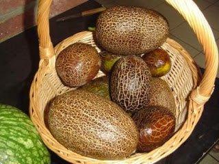 HEIRLOOM NON GMO Sikkim Cucumber 15 seeds