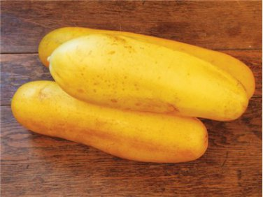 HEIRLOOM NON GMO Jaune Dickfleischige Cucumber15 seeds