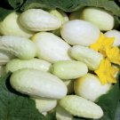 HEIRLOOM NON GMO Ruby Wallace's Old Time White Cucumber 15 seeds
