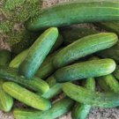 HEIRLOOM NON GMO Straight Eight Cucumber  15 seeds