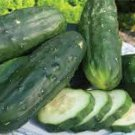 HEIRLOOM NON GMO Double Yield Cucumber 15 seeds