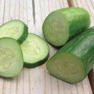 HEIRLOOM NON GMO Muncher Cucumber 15 seeds