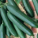 HEIRLOOM NON GMO Tendergreen Burpless Cucumber 15 seeds
