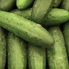 HEIRLOOM NON GMO Dar Cucumber 15 seeds