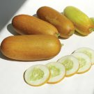 HEIRLOOM NON GMO Siamese Giant Cucumber 15 seeds