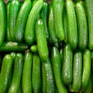 HEIRLOOM NON GMO Persian Beit Alpha Cucumber 15 seeds