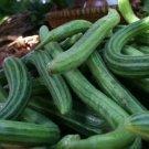 HEIRLOOM NON GMO Serpent Melon  15 seeds