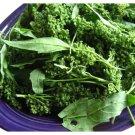 HEIRLOOM NON GMO Mercado Amaranth 25 seeds
