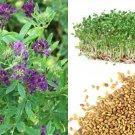 HEIRLOOM NON GMO Alfalfa 500 seeds