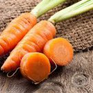 HEIRLOOM NON GMO Shin Kuroda 5' Carrot 50 seeds