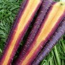 HEIRLOOM NON GMO Cosmic Purple Carrot 50 seeds