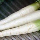 HEIRLOOM NON GMO White Belgium Carrot 50 seeds