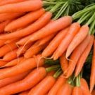 HEIRLOOM NON GMO Muscade Carrot Carrot 50 seeds