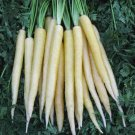 HEIRLOOM NON GMO Snow White Carrot 50 seeds