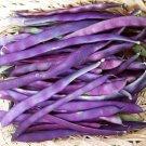 HEIRLOOM NON GMO Purple Dove Bush Bean 25 seeds
