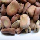 HEIRLOOM NON GMO Aquadulce Fava Bean 25 seeds