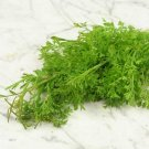 HEIRLOOM NON GMO Wrinkled Cress 250 seeds