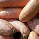 HEIRLOOM NON GMO Pink Banana Squash 15 seeds