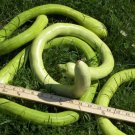 HEIRLOOM NON GMO Italian Edible Gourd 10 seeds