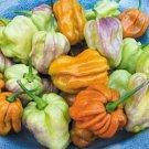 HEIRLOOM NON GMO Spicy Mustard Habanero Pepper Mix 25 seeds