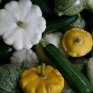 HEIRLOOM NON GMO  Summer Squash Mix 15 seeds