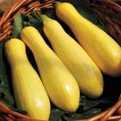 HEIRLOOM NON GMO Early Prolific Straightneck Squash 15 seeds