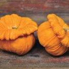 HEIRLOOM NON GMO Gelber Englischer Custard Squash 15 seeds