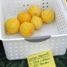 HEIRLOOM NON GMO Lemon Squash 15 seeds