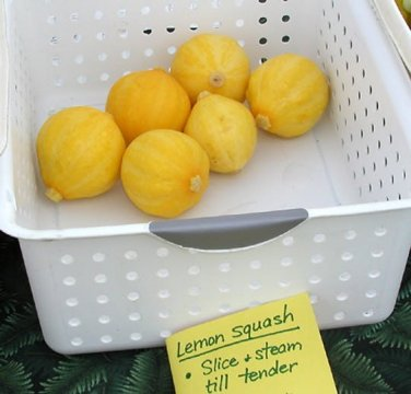 HEIRLOOM NON GMO Lemon Squash 15 seeds