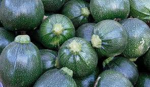 HEIRLOOM NON GMO Tondo Scuro Di Piacenza Squash 15 seeds
