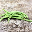 HEIRLOOM NON GMO Contender (Buff) Valentine Bush Bean 25 seeds