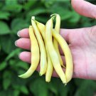 HEIRLOOM NON GMO Golden Wax Bush Bean 25 seeds
