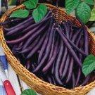HEIRLOOM NON GMO Royal Purple Pod Pole Bean 25 seeds