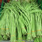 HEIRLOOM NON GMO Green Chinese Noddle Bean 25 seeds
