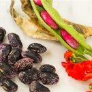 HEIRLOOM NON GMO Barnside Sweet Runner Bean 25 seeds