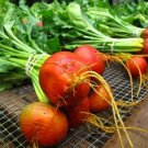 HEIRLOOM NON GMO Golden Beet 25 seeds
