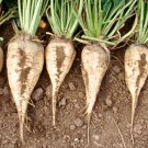 HEIRLOOM NON GMO Sugar Beet 25 seeds