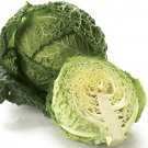 HEIRLOOM NON GMO Aubervilliers Cabbage 100 seeds