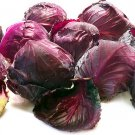 HEIRLOOM NON GMO Koda Cabbage 100 seeds