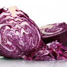 HEIRLOOM NON GMO Tete Noire Cabbage 100 seeds
