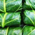 HEIRLOOM NON GMO Georgia Southern Creole Collards 100 seeds